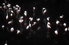 Free Flamingos Stock Image - 35085121
