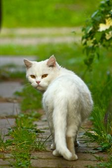 White Cat In Garden Royalty Free Stock Photography