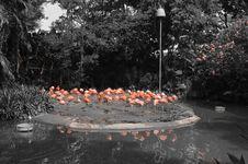 Free Pink Flamingos Royalty Free Stock Images - 35086599