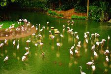 Free Flamingos Stock Images - 35087064