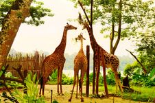 Free Giraffes Stock Photo - 35087980