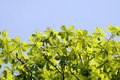 Free Green Leaves Royalty Free Stock Photo - 35090185
