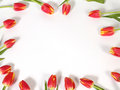 Free Tulips Stock Photography - 35090552