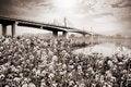 Free Suspension Bridge Landscape In Monochrome Royalty Free Stock Photography - 35097057