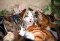 Free Kittens Sleeping Royalty Free Stock Image - 35098236