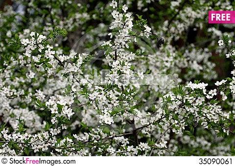 Free Spring Stock Image - 35090061