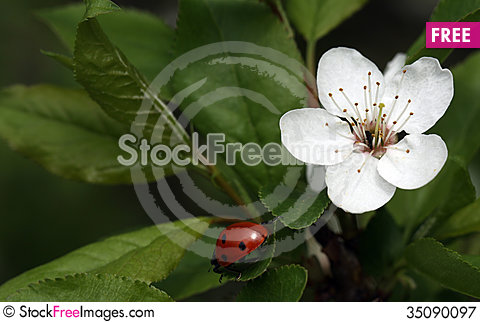 Free Spring In The Orchard Royalty Free Stock Photography - 35090097