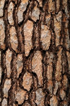 Free Bark Stock Photos - 35090273