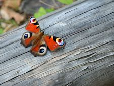 Free Peacock Butterfly On The Wood Stock Images - 35092254