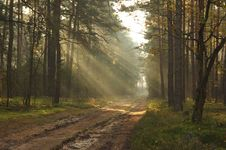 Free Forest Road. Royalty Free Stock Image - 35092486