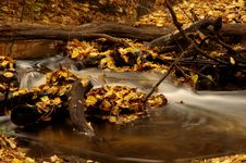 Free Forest Stream. Royalty Free Stock Photo - 35092915