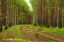 Free Forest Road. Royalty Free Stock Photos - 35094048