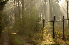 Morning In The Forest. Royalty Free Stock Photo