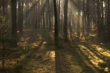 Free Morning In The Forest. Stock Photography - 35094782