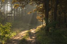 Morning In The Forest. Royalty Free Stock Image