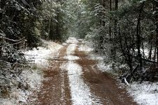 Free Forest In Winter. Royalty Free Stock Images - 35095249