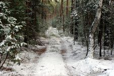 Free Forest In Winter. Royalty Free Stock Photography - 35095347