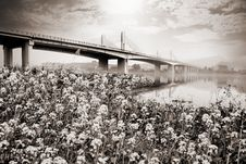 Free Suspension Bridge Landscape In Monochrome Royalty Free Stock Photography - 35097057