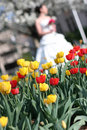 Free Bride Bouquet And Tulips Royalty Free Stock Image - 3513826