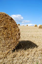 Free Close Photo Of A Hay Bale Royalty Free Stock Photo - 3515115