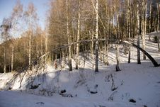 Free Birches In Sunny Winter Day Stock Photos - 3510833