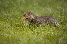 Free Kitty Royalty Free Stock Photos - 3511198