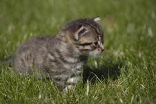 Free Kitty Stock Image - 3511201