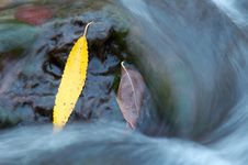 Free Leaf Amongst River Stock Photo - 3511260