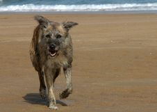 Dog On The Beach- Spain Stock Images
