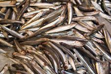 Free Anchovies Stock Photos - 3511523