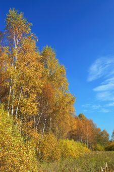 Autumn. River And Yellow Trees Stock Photos