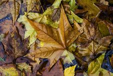 Free Leaves Stock Photos - 3512773