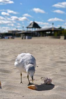 Free Gull Attacks Shells Stock Image - 3513501