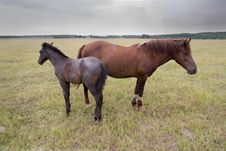 Free Horses Stock Images - 3514254