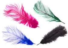 Free Color Feathers Stock Image - 3515831