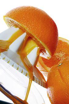 Free Fresh Oranges Royalty Free Stock Photo - 3515895