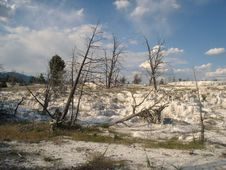 Free Mammoth Hot Springs Royalty Free Stock Images - 3515999