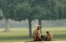 Free Monkey Family Stock Photos - 3516223