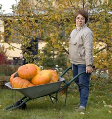 Free Woman And Barrow Of Pumpkins Royalty Free Stock Photo - 3516285