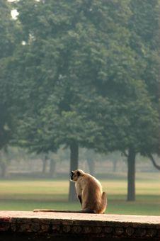 Free Curious Monkey Stock Image - 3516321