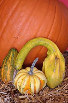 Free Halloween Pumpkins Stock Images - 3516454