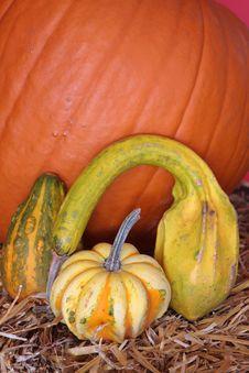 Free Halloween Pumpkins Stock Images - 3516454