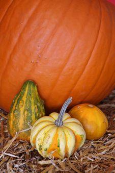 Free Halloween Pumpkins Stock Image - 3516461