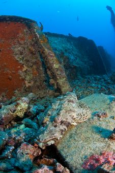 Free Crocodile Fish On Ship Wreck Stock Photography - 3516472