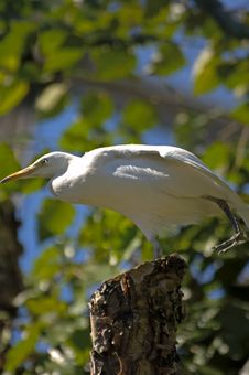 Free Bird On A Tree 2 Stock Photography - 3516642