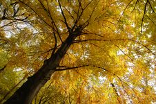 Free Autumn In The Forest Stock Images - 3517154