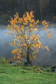 Free Lonely Tree With Autumn Colors Stock Images - 3517954