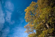 Free Colorful Tree And Blue Sky Royalty Free Stock Photo - 3517965