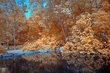 Infrared Photo – Tree And Lake Stock Photo