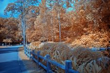 Infrared Photo – Tree And Path Royalty Free Stock Photography